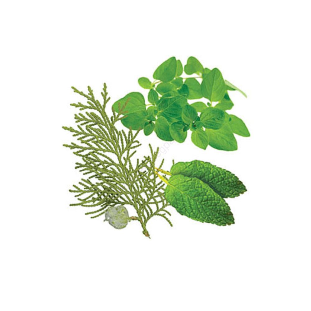 AromaTouch® illóolaj keverék - doTERRA - 15ml