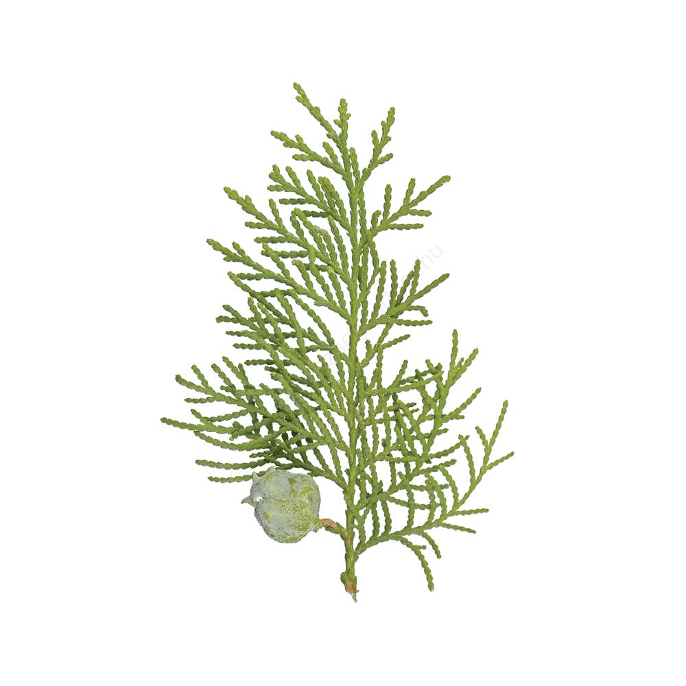 Ciprusfa (Cypress) illóolaj - doTERRA - 15ml
