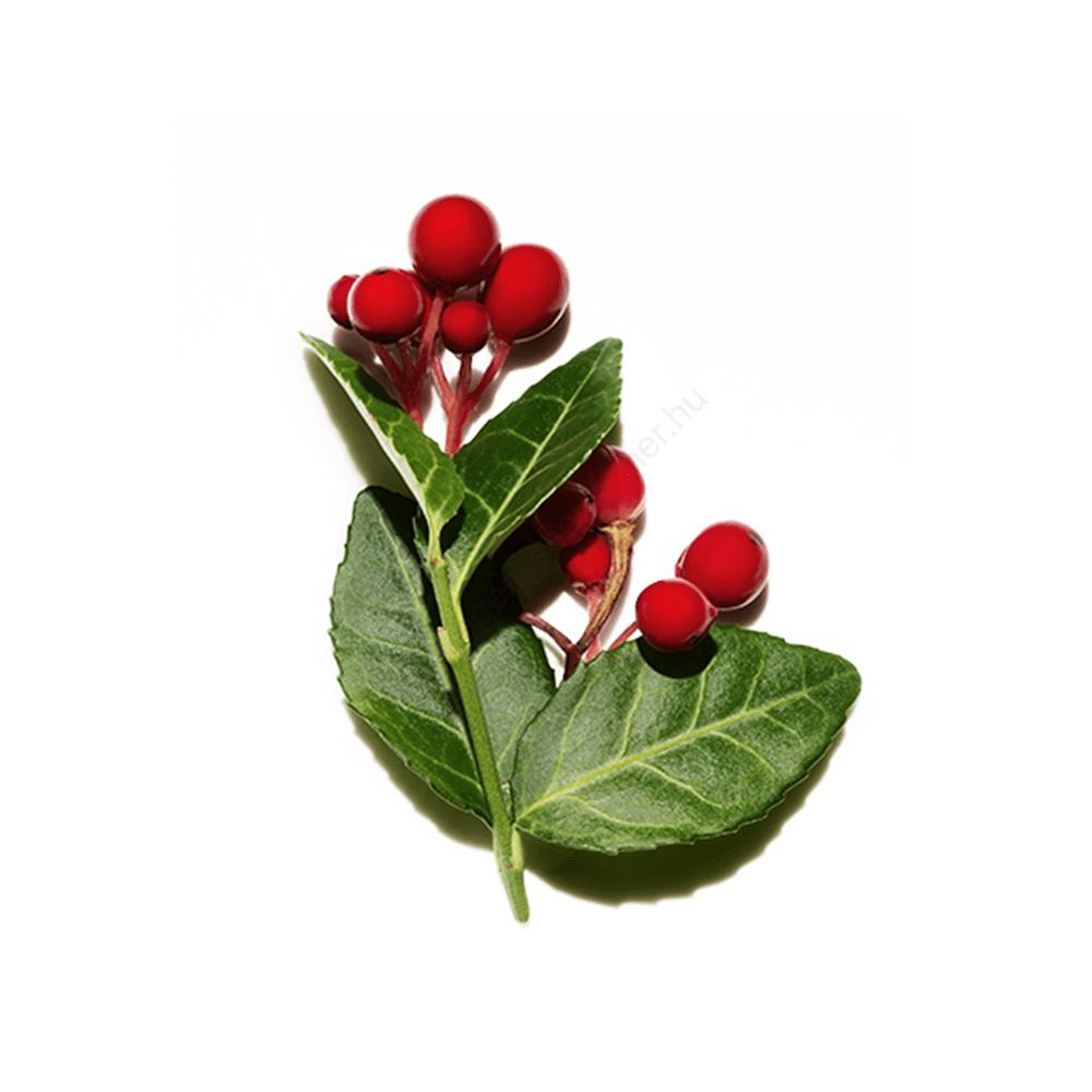 Kúszó fajdbogyó (Wintergreen) illóolaj - doTERRA - 15ml